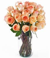 24 Peach Roses