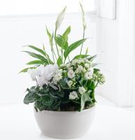 Elegant Plants