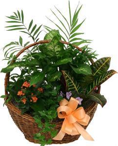 Indoor Plant Arrangement