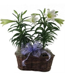 Easter Lily Basket