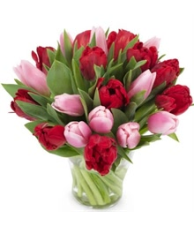 Pink and Red Tulips